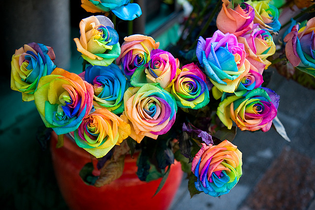 Pack of many rainbows images rainbow flowers wallpaper and for Where to find rainbow roses