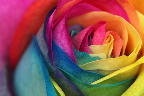Rainbow Roses images Rainbow roses wallpaper and ...