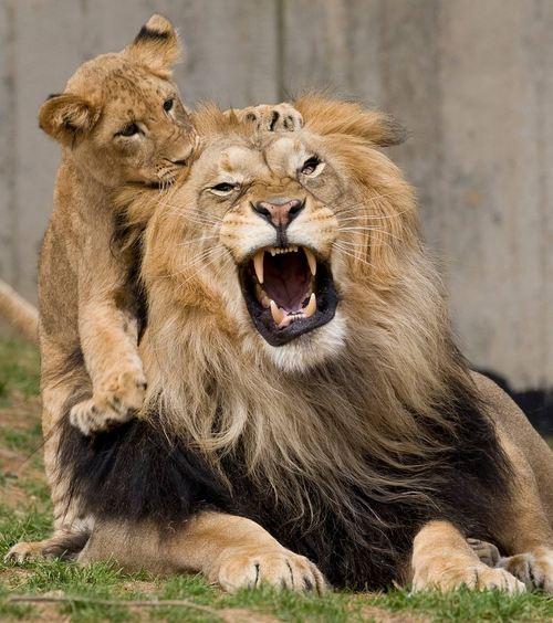 Simba with Kiara