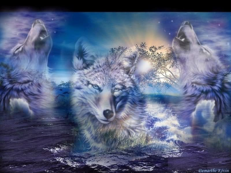 wolves images wolves hd wallpaper and background photos 32161203