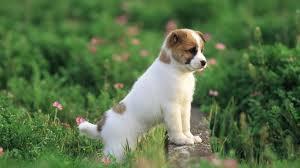 cutee cachorritos