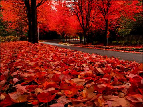 ★ Autumn ☆