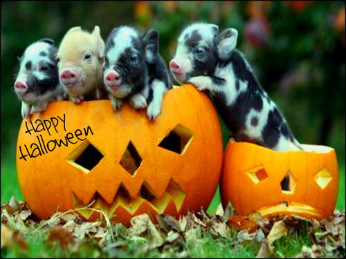★ Happy Хэллоуин ☆