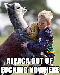 Alpaca Out Of Nowhere!