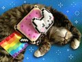 Cat with Nyan Plushie - nyan-cat photo