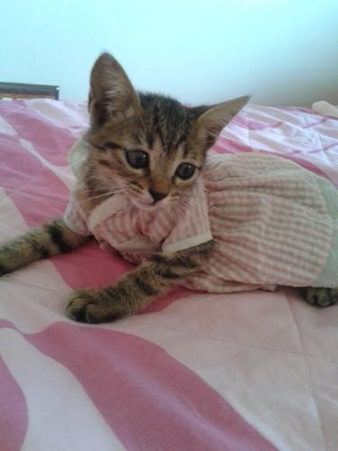 cinderela kitten