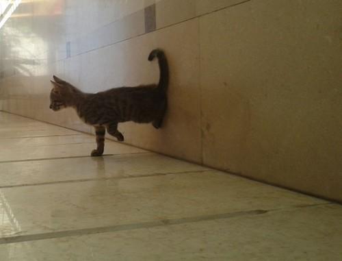 Cool Kitten