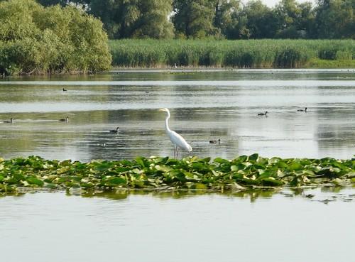 Danube Delta, Romania 欧洲 water landscape