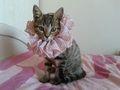 Fashionista kitten