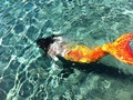 H2o mermaid tail - h2o-just-add-water photo