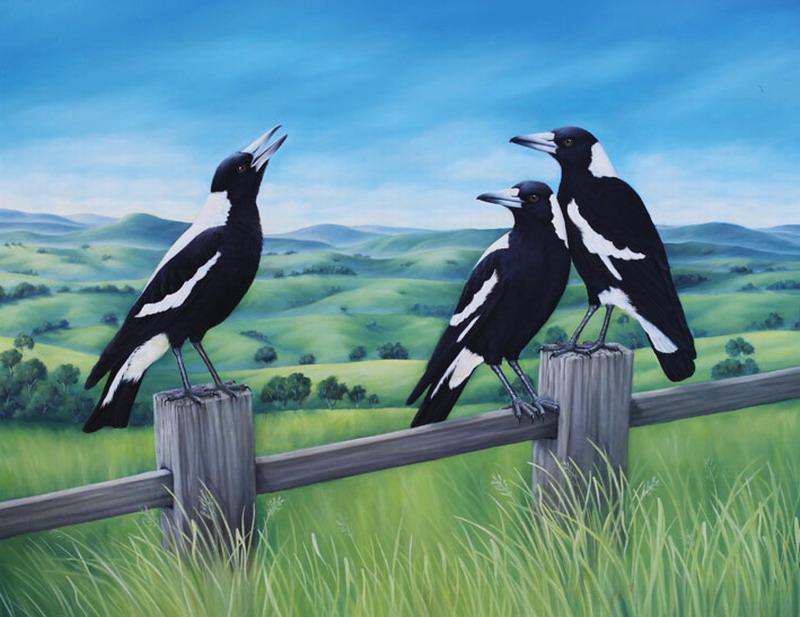 Magies Australian Native Birds
