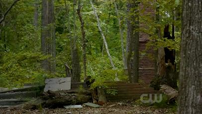 Mystic falls wallpaper containing a sitka spruce, a ponderosa, and a douglas fir titled Mystic Falls