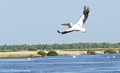 Romania - Danube Delta - water landscapes pelicans - romania photo