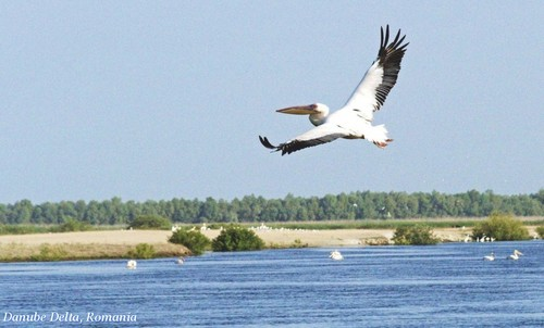 Romania - Danube Delta - water landscapes pelicans