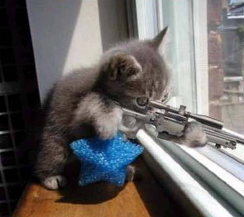 Sniper Cat!!!!!!!