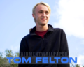Tom Fan Art  - tom-felton fan art