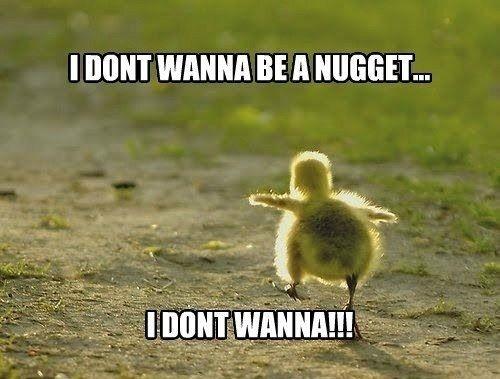 cute baby बत्तख, बतख