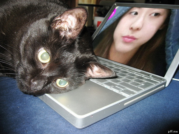 dara 2NE1 black cat