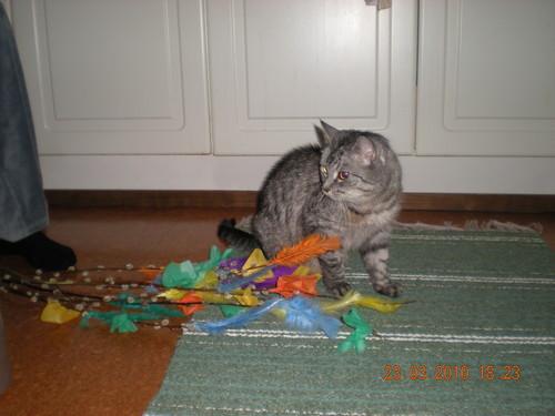 my cat<3