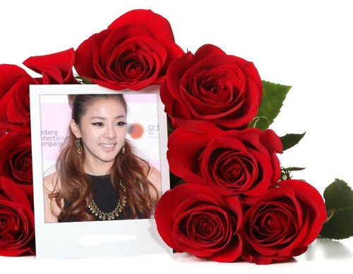 sandara park 2NE1 many red rose