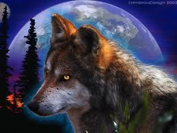wolf in da night