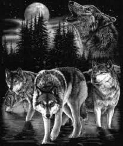 lobo apaixonados place wallpaper called lobos