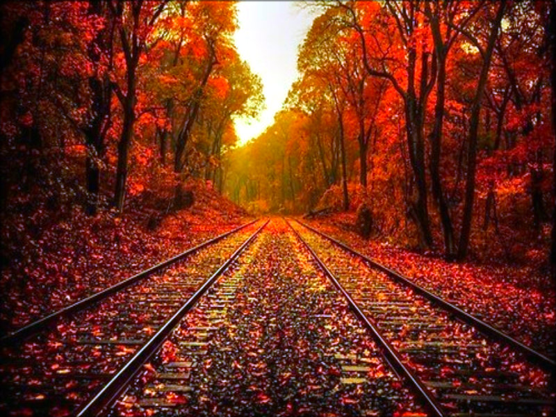 Autumn images ★ Autumn ☆ HD wallpaper and background photos ... Autumn