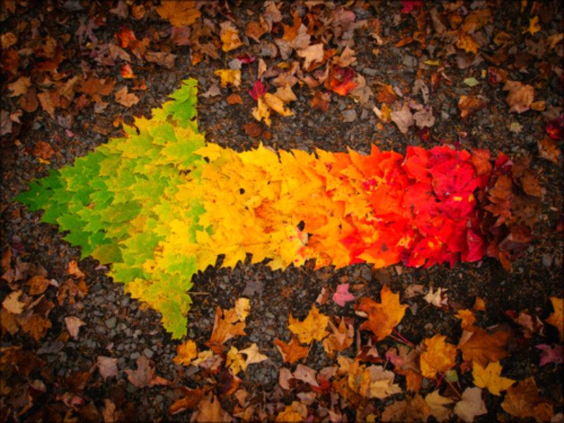 Autumn ☆ - Autumn Wallpaper (32342283) - Fanpop Autumn