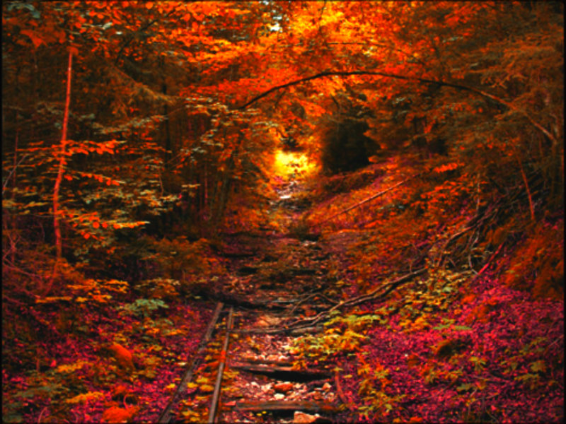 autumn autumn wallpaper 32352981 fanpop
