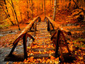  Autumn   - autumn wallpaper