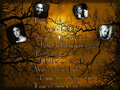 pretty-little-liars-tv-show - ★ Pretty Little Liars ☆  wallpaper