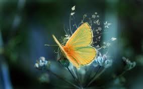 A Butterfly's Beauty