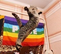 Awesome Kitty! - lgbt photo