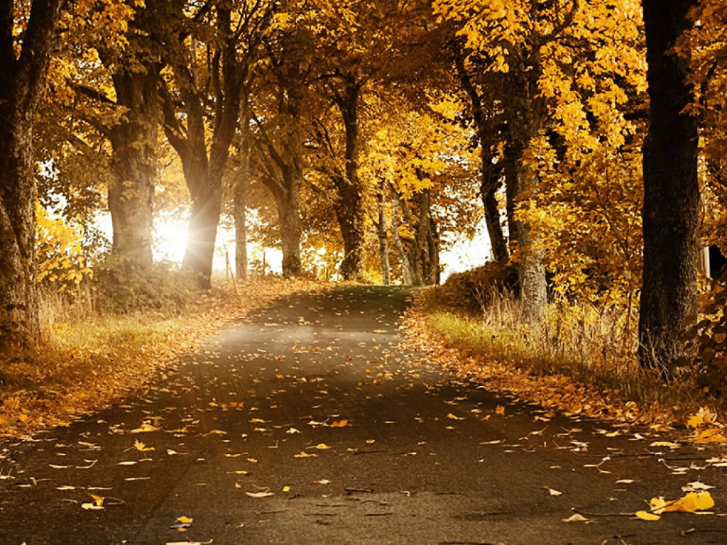 Beautiful Autumn - Daydreaming Wallpaper (32346492) - Fanpop