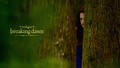 Bella Cullen - twilighters wallpaper