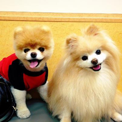 Boo & Buddy!!!