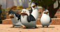 CRAZY FOR RICO - rico-the-penguin photo