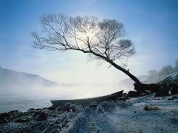 China's Trees