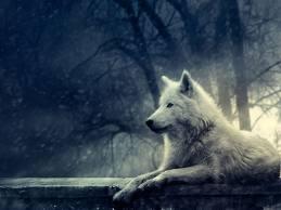 Фэнтези Волки