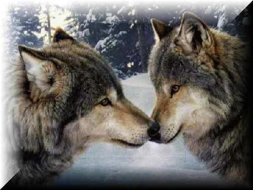 fantaisie loups