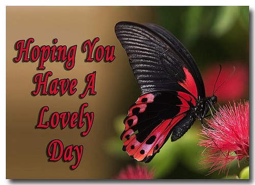 Have a lovely day my fairy sister