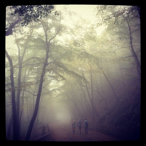 Keith Harkin Hintergrund containing a beech, a live oak, and a baum titled Hiking through the fog in West Virginia