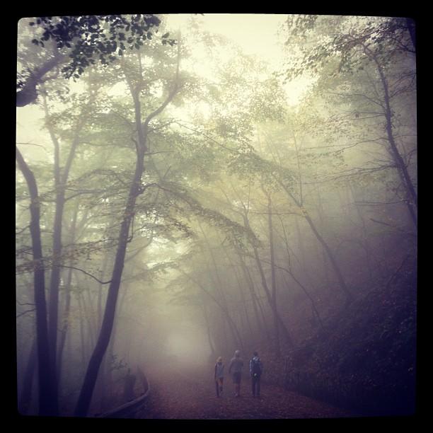 Hiking through the fog in West Virginia