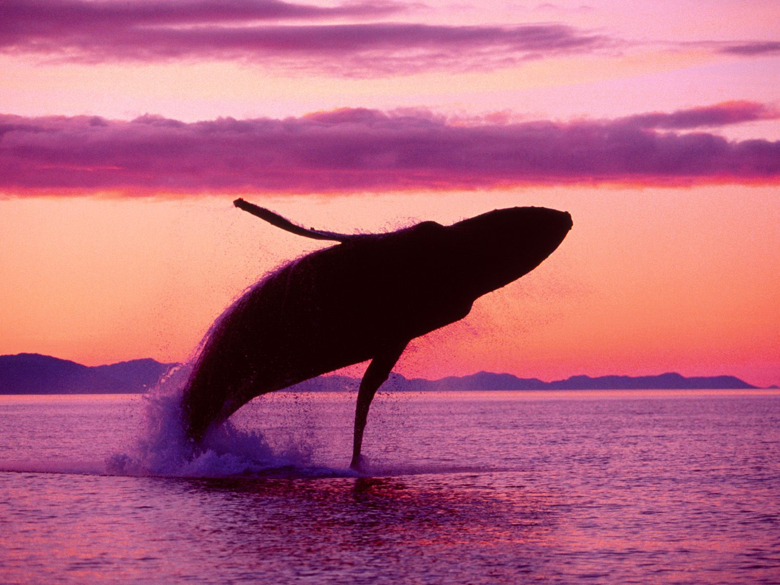 Whale wallpaper - photo#14