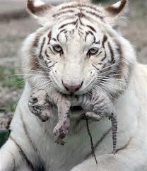 Motherly tình yêu
