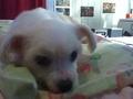 My Pets! <3