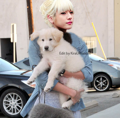 nu'est wallpaper containing a great pyrenees called Ren