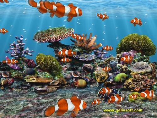Sea Life 壁紙 entitled Sea Life