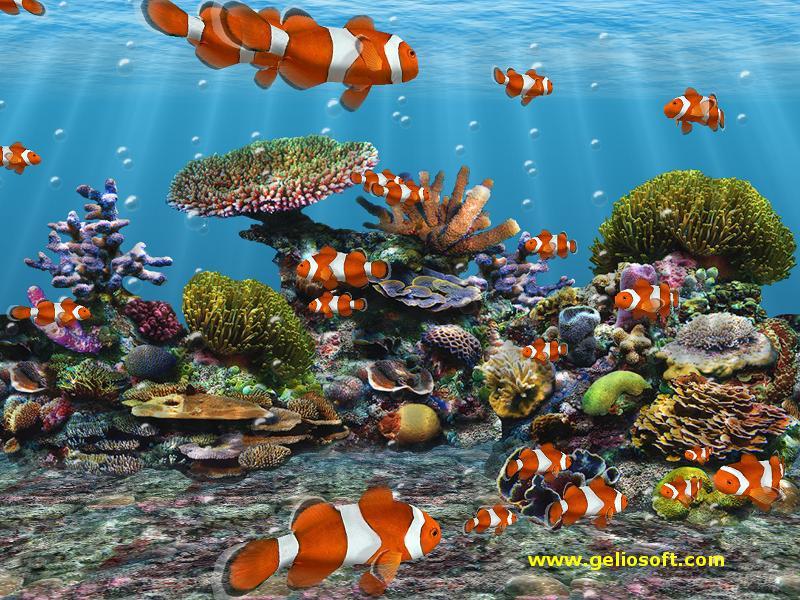 Aquarium desktop 2006