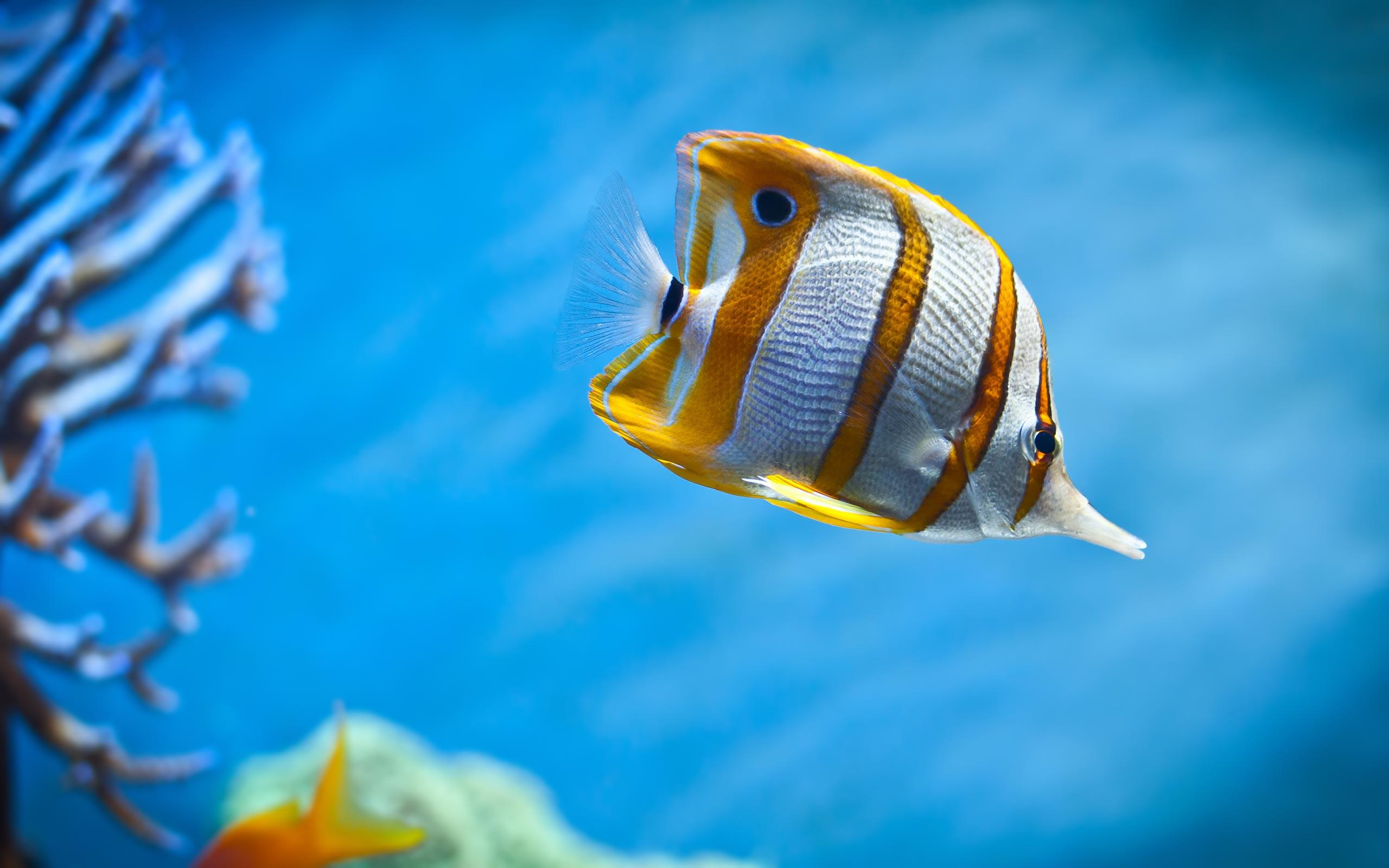 Sea life sea life